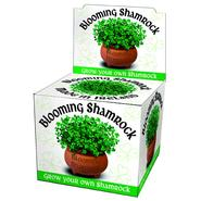 Grown your own Shamrock
